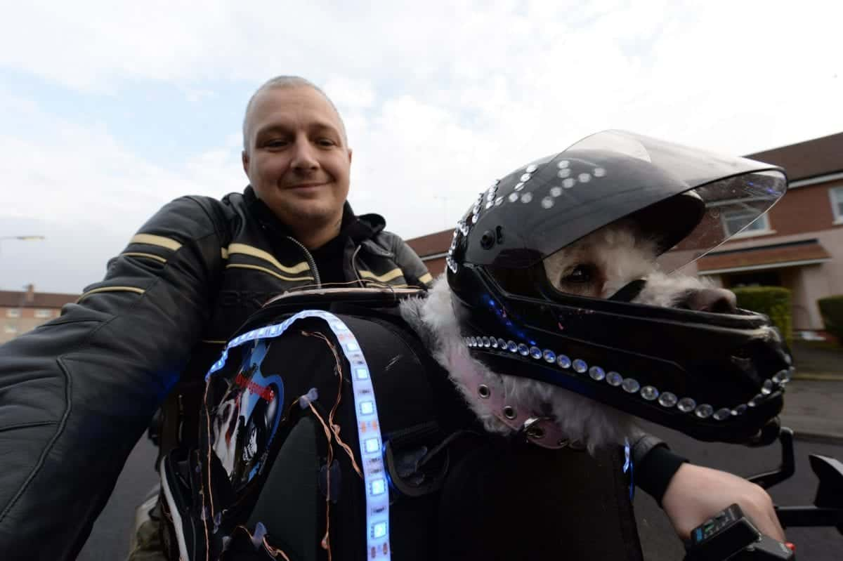 """This dog is a real-life Hairy Barker - and goes on motorbike rides dressed in full leather gear and goggles. See story CPRIDER. The motorcycle-loving hound called Milly is a regular sight speeding around the country lanes in jacket and helmet. Milly, a Bichon Frise, dons the gear and hops into her specialised travel bag on her owner's bike when they go on adventures. Retired plumber Paul Crossan, 39, first met """"timid"""" Milly while he was looking for a canine companion for his camper van road trips. She had been neglected by previous owners, but Paul says he """"fell in love"""" from the moment he set eyes on her. The daredevil duo are practically inseparable nowadays -- travelling about the country on Paul's motorbike."""