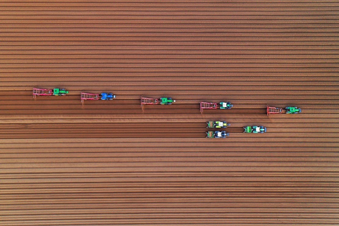 """Farmers planting potatoes in a field in East Winch, Norfolk by Chris Taylor. See Masons copy MNPOTATO: This mesmerising image looks like toy tractors playing on a fabric field - but is actually a team of farmers hard at work. Photographer Chris Taylor, 47, spotted the workers in a field in East Winch, Norfolk, on Tuesday while taking aerial snaps from the sky with his drone. As they planted potatoes, they etched perfectly straight lines in the soil which looked flawless from the air. Commenting on the eye-catching effect, Chris said: """"Looks like tiny tractors making corduroy!"""""""