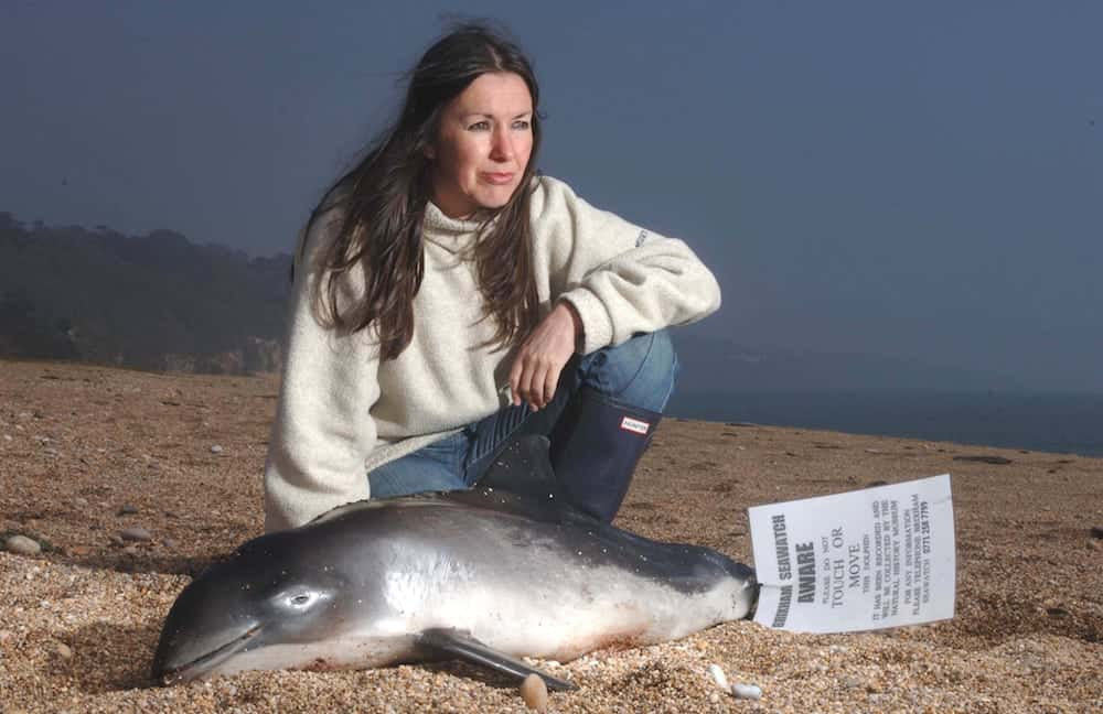 FILE PICTURE - Campaigner Lindy Hingley at Slapton Sands with a rare infant porpoise that was washed up on the beach. See SWNS story SWDOLPHIN; Wildlife campaigners fear that more dolphins will be found washed up dead on British beaches - because of BREXIT. Almost 200 dolphins and porpoises have been found dead on Cornish beaches already this year with the sharpest-ever rise recorded between January and April. Most of the protection for the mammals comes from the EU but once we leave campaigners say even more will die with no replacement legislation currently proposed. A petition urging Fisheries Minister George Eustice to put laws in place protecting dolphins, porpoises and whales once Britain leaves the EU has now got nearly 55,000 signatures.