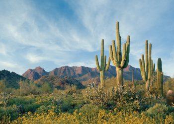 McDowell Mountain Preserve Scottsdale, Arizona