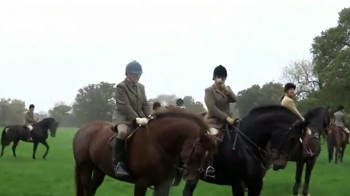 """Footage showing the hunt chasing a fox. See Ross Parry story RPYHUNT; A police investigation into a hunt has been dropped by the CPS due to a lack of evidence - despite officers being given a VIDEO of a fox being chased by hounds. The CPS was handed footage of a fox across fields in Cheshire - followed by terriermen on quads and hunt members on horses. Cheshire Monitors - a group of hunt saboteurs - captured the chase from two different locations and gave the footage to the police, who took statements and did site visits. But after six months of investigating, the CPS said the case """"didn't meet the evidential test"""" so dropped the case. The protesters are calling on law makers to strengthen the """"weak and pretty useless"""" Hunting Act which outlaws the hunting of foxes by hounds."""