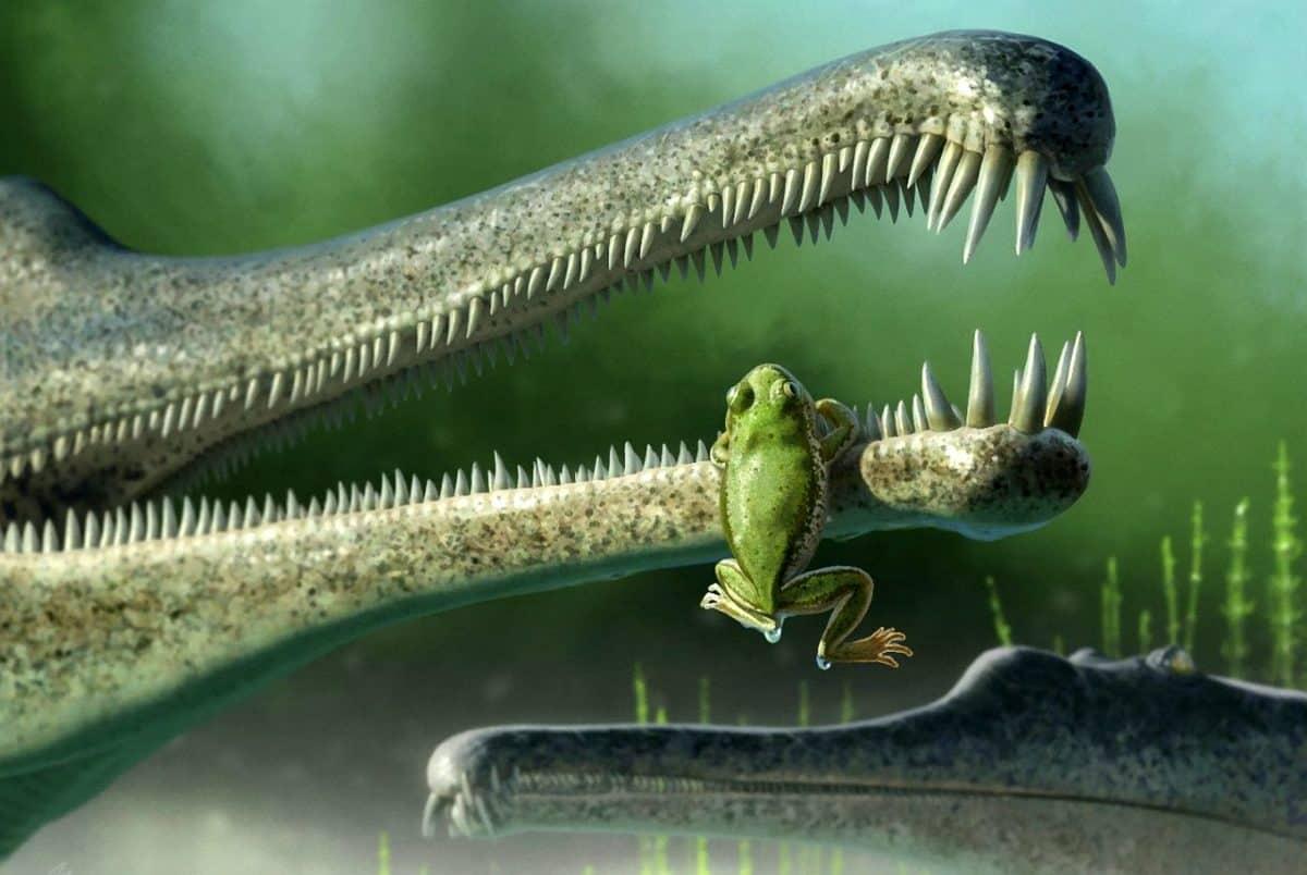 Frog ancestor