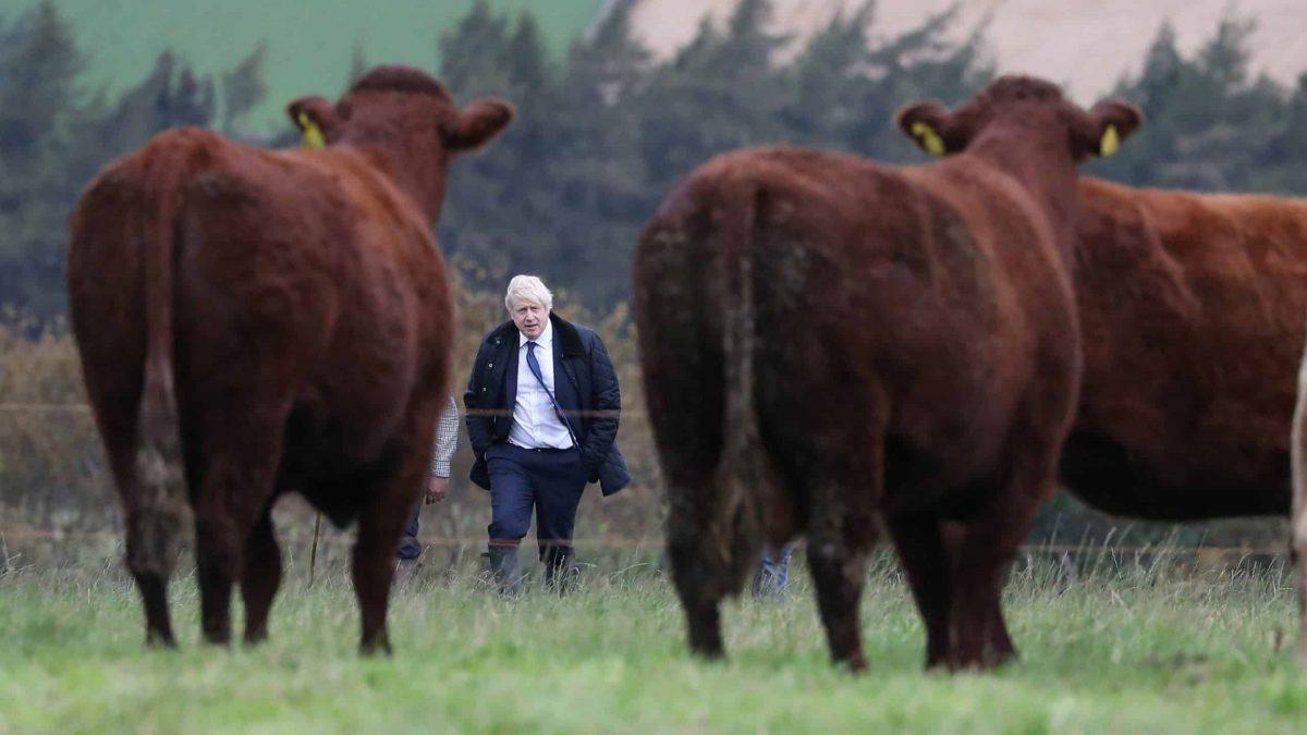 bull s Boris Johnson