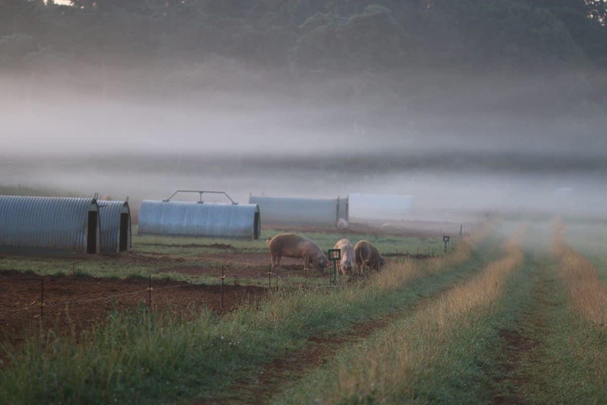 Regenuary Regenerative Farming