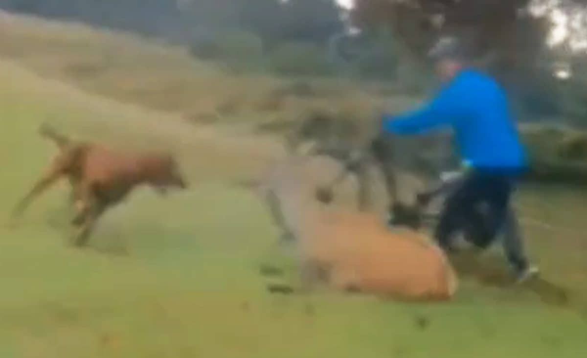 Frame taken from video dated 1/10/2020 and released by London's Metropolitan Police of a red setter dog attacking a deer in Richmond Park. Despite the efforts of passing cyclists the animal suffered significant injuries and was later put down by a gamekeeper. The dog's owner, Franck Hiribarne, 44, from Kingston, pleaded guilty of causing/permitting an animal they were in charge of to injure another animal in a Royal Park and was handed a total fine of £602. Issue date: Monday January 18, 2021.