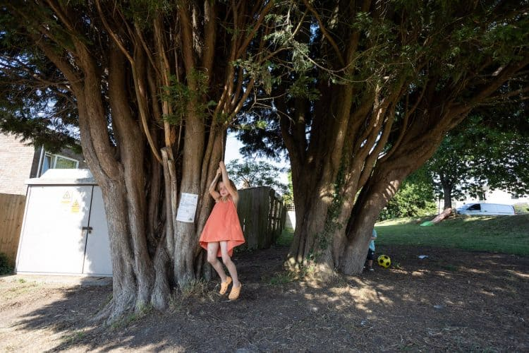 Rowan, 5, plays under the pair of trees. Credit;SWNS