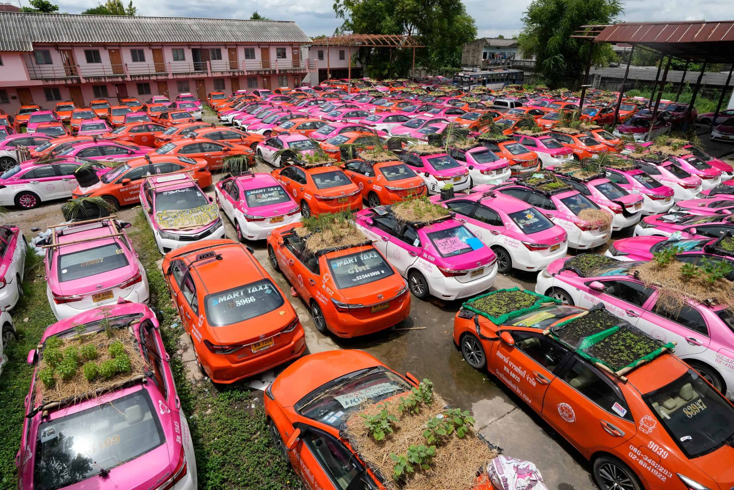 Idle taxis go green with mini gardens on car roofs